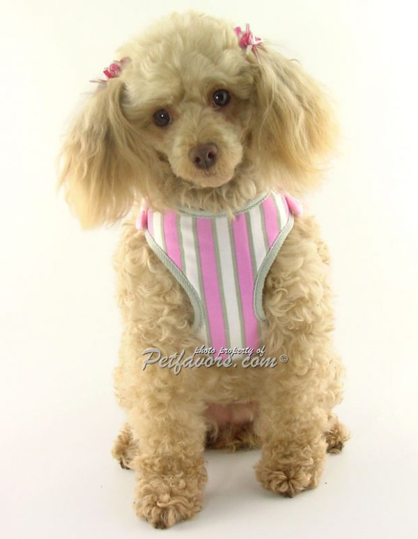 EasyGo Pink Stripe Harness & Leash Set with free Crystal Butterfly Charm