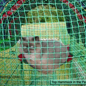 Kittywalk Cat Enclosure