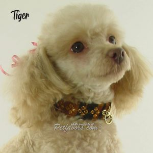Animal Print Collection - Collars - Tiger