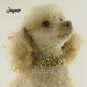 Animal Print Collection - Collars and Leashes - Jaguar