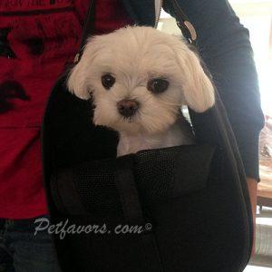 Petote Payton Pet Carrier